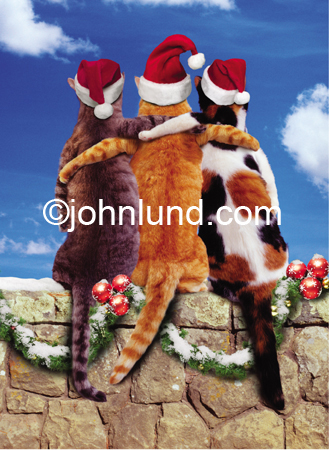 Funny animal Christmas picture of three cat friends sitting on a rock wall with their backs to the camera and wearing Santa hats.
