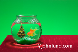 A goldfish shares his or her bowl with a christmas tree in this stock image created for greeting card use, one of a large series of greeting card images featuring our animal friends in funny anthroporphic situations and poses.