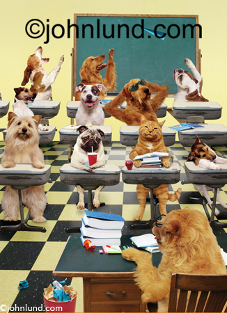 Humorous lol Stock pictures of Pugs, Beagles, and Airedales in a classroom going crazy, throwing paper airplanes and clowning around. Pictures of dogs in the classroom doing things people do.