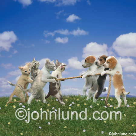 Funny photo of Cute kittens and adorable puppies having a tug of war on a grassy field of flowers. Who is going to win this pet contest?