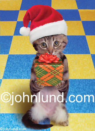 Stock photo and funny animal picture of a kitten wearing a Santa Hat and holding out a gift in a holiday theme.