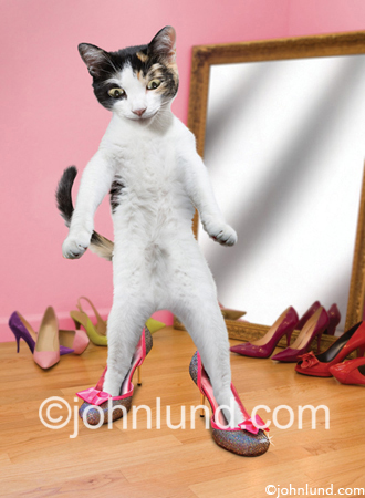 Cute kitten (cat) wearing fancy shoes in front of a mirror. This adorable little kitten loves to play dress up. This cat also likes high heel shoes.