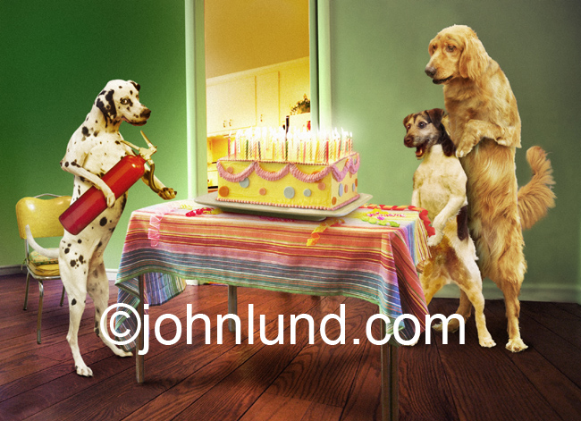 Pictures of golden retrievers Funny stock photo of three dogs with