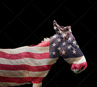 This democratic donkey stock photo features a donkey, multiple exposed with an American Flag, on a black background (white background is also available).