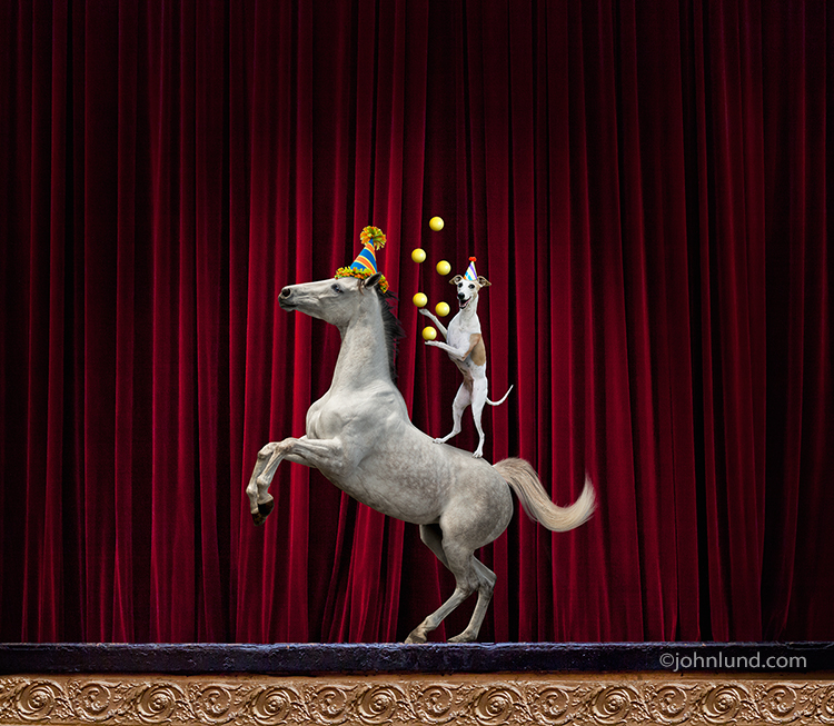 A dog and pony perform tricks on stage in a funny stock photo about presentations, new work pitches, and meeting issues.