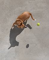A dog is caught in the moment of playing fetch in a stock photo, a moment in time that captures perfectly the joy and enthusiasm of a dog playing fetch.