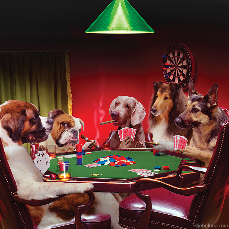 Pictures of a group of dogs playing poker including: A St ...