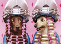 Silly pet pic featuring two dogs sitting in a beauty salon wearing curlers and sitting under hair dryers.