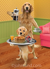 Mother's day! A golden retriever and his puppy are serving breakfast to mom in a happy mother's day greeting card picture.
