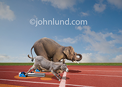 A donkey and an elephant line up in starting blocks on a sports track in a humorous stock photo about political races between democrats and republicans.