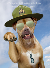 This funny dog picture, a Boxer as a Drill Sargent, was created as a humorous greeting card picture for Marian Heath Greeting Cards and is available as a stock photo.