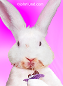 An Easter Bunny eats a chocolate rabbit getting his face covered in chocolate in this funny Easter greeting card image.