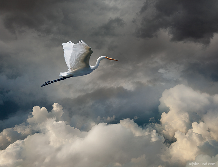 An egret flies through storm clouds in a dramatic and beautiful stock photo about freedom, the beauty of nature, and fantasy.