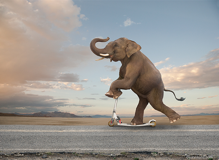 In this funny elephant photo an elephant rides his scooter with an expression of delight down a country road under an early morning sky in a stock photo about agility, balance and the unexpected.