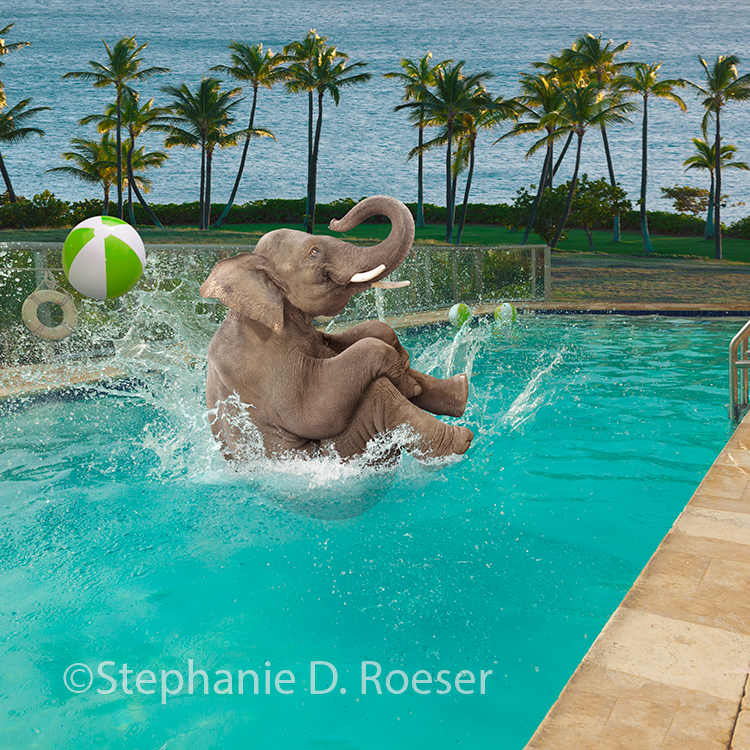 A funny elephant does a canon ball dive into a swimming pool in a humorous stock photo about making a big splash!