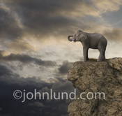 An elephant stands on the edge of a cliff with storm clouds in the background in this picture of facing challenges, change and even extinction.