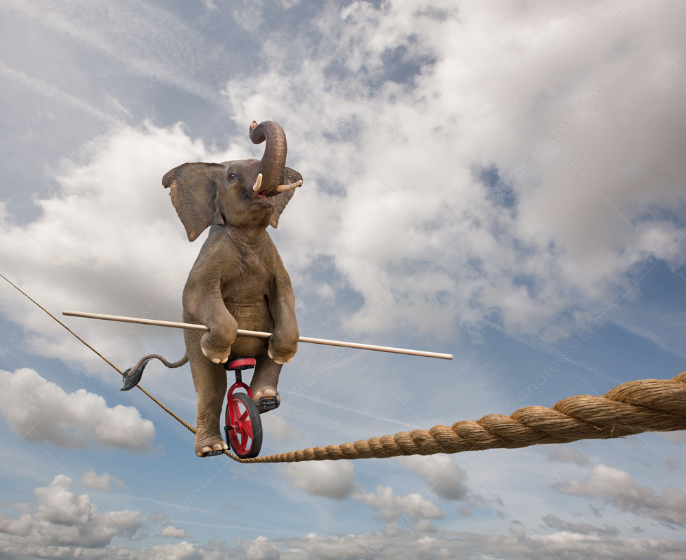 Elephant-Tightrope-Tricks.jpg