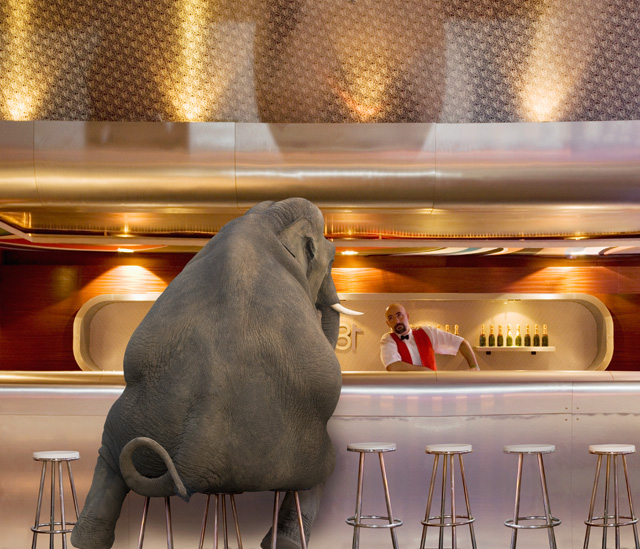 Picture of an elephant at a bar