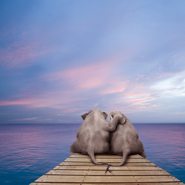 Two elephants on a dock picture