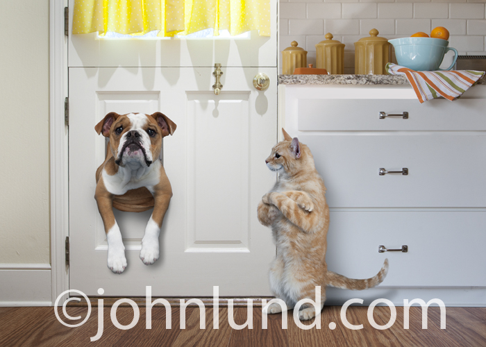 In this funny pet picture an English Bulldog is stuck in a pet door as a & Funny Bulldogs and Smirking Cats