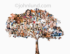 A family tree...this stock photo shows the silhouette of a large oak tree filled with social media portraits to show ancestry, community, and online tribes and families.
