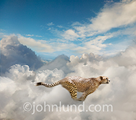 Fast cloud computing is dramatically illustrated in this stock photo of a cheetah sprinting through clouds.