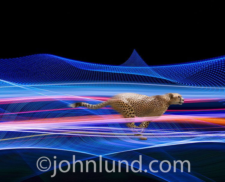 Fast networks, quick connections, and the speed of the Internet are all illustrated in this striking stock photo of a cheetah sprinting through a digital pipeline with streaming data.