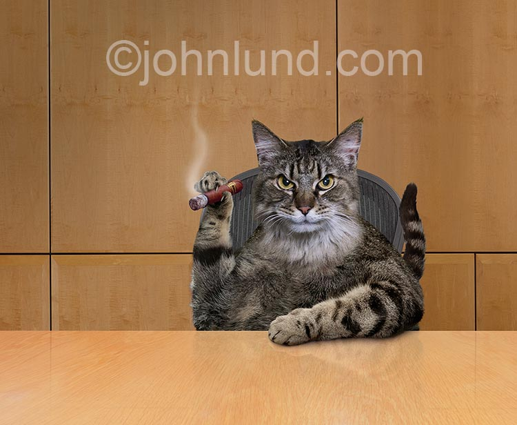 Fat Cat Smoking A Cigar