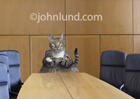 A fat cat sits at the head of the board room in a funny pet picture with a business twist.