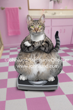 A very fat cat sits on a bathroom scale in a pink bathroom and wearing a satisfied look in a funny cat photo. This is a tabby cat and one of John Lund's Animal Antics collection of funny pet pix.