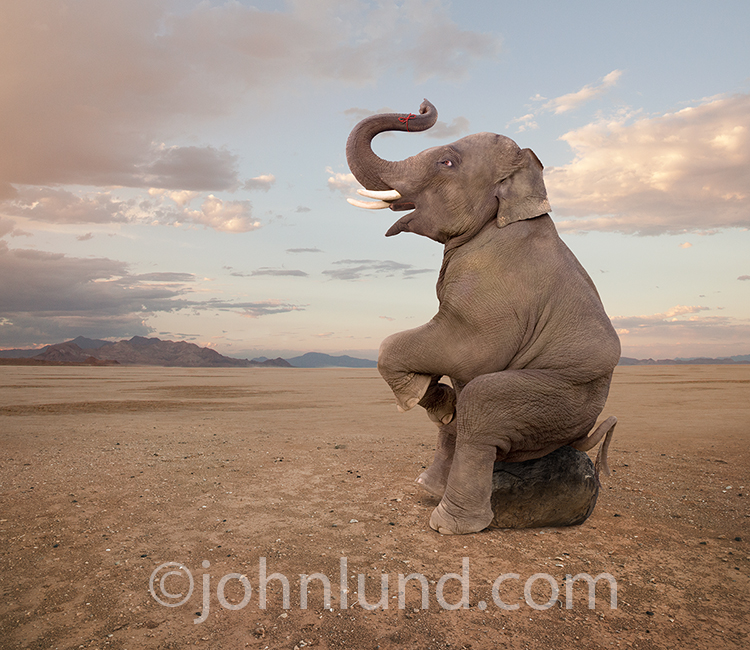 A forgetful elephant sits on a rock and contemplates a red string tied around his trunk in a humorous stock photo about memory issues.