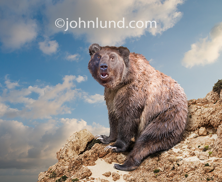 "A funny bear sits on a rock outcropping with a quizzical look of surprise on his face as if asking ""Who me?"" in an image created for humorous greeting cards and conceptual stock photo needs."