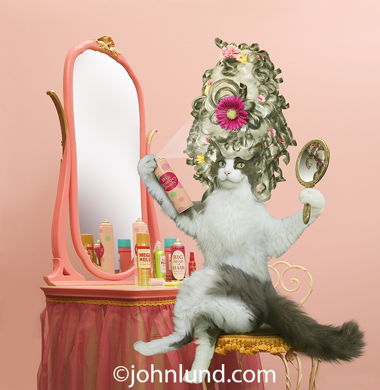 A funny cat sits in front of a mirror applying hair spray to her over-the-top hair do in a cat photo created for a humorous line of greeting cards.