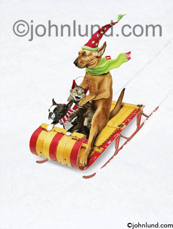 A Bloodhound A Pug And A Cat Ride A Sleigh Down A Hill Of Snow In