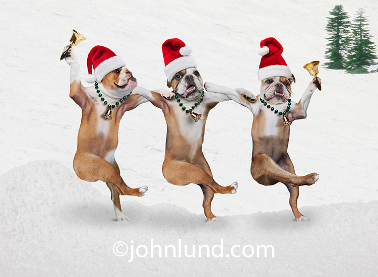 funny christmas bulldog - photo #21