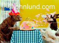 Funny animal stock picture of a lol cat blowing birthday candles out...and cake onto a dog's face. Funny pet pictures of cats abusing dogs.
