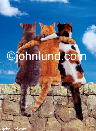 Three cats sit on a rock wall with their arms around each other in a parody of cat companionship and loving friendship. Funny cat picture.