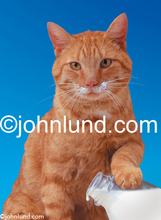 Picture of a cat with a milk mustache and his paw on a milk bottle in a parody of the famils Got Milk Ad campaign.