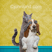 A funny cat covers the eyes of a Basset hound in a humorous stock photo created for advertising, editorial, social media and greeting card uses primarily in the cat, dog and pet markets.