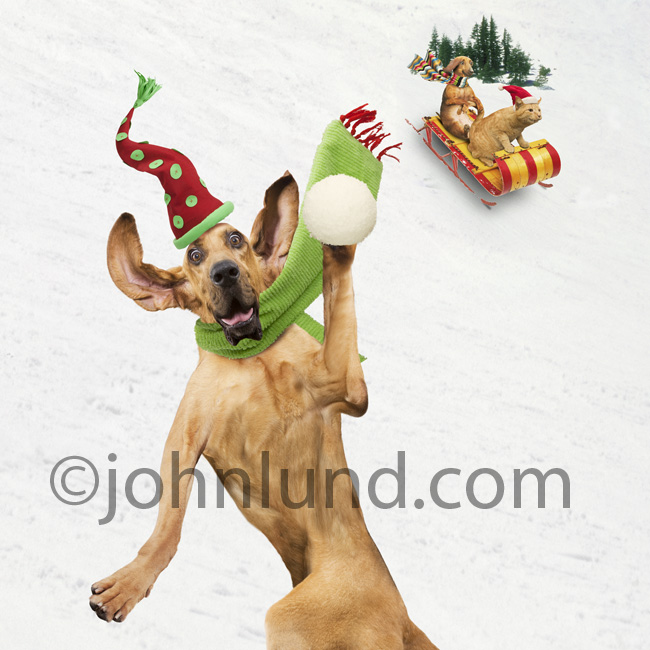 Funny  Dog  Throwing  Snowball