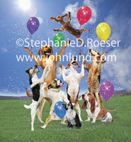 A group of seven dogs toss a Daschund into the air in celebration and congratulations complete with confetti and balloons.
