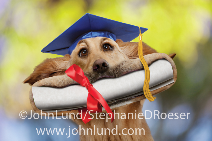 Funny graduation greeting card photos of and for mans best friend m4hsunfo