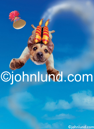 Funny animal photo and stock picture of a rocket powered Jack Russell Terrier flying through the sky with Paws out stretched.