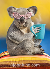 A Koala bear holds a cup of coffee and wears pink sunglasses in this humorous greeting card and stock photo picture created primarily for mother's day.