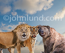 In this funny animal picture a lion, tiger and bear (Lions, Tigers And Bears...Oh My) look at the camera with expressions of shock and astonishment...perfect for use as a humorous greeting card or stock photo.