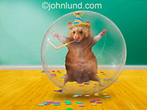 A hamster is in party mode wearing a party had and blowing a noisemaker while in his exercise ball in this funny hamster photo.