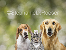 Two dogs, a cat and a mouse wear expressions of shot in this funny animal stock and greeting card photo.
