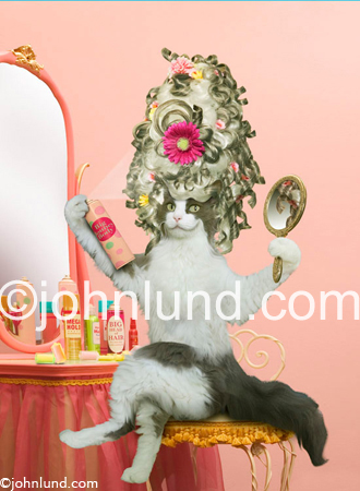 A cat sprays hair spray on her outrageous, over the top, bee hive hair do, as she primps in front of a vanity mirror in her bedroom. Cat looking in the mirror picture. Cats doing human things.