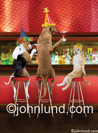 Two Dogs And A Cat Toast At The Bar While Sitting On