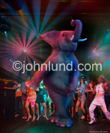 Funny Picture of an elephant disco dancing among the party goers in a night club with spinning lights and disco balls.